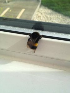 bee-looking-out-window